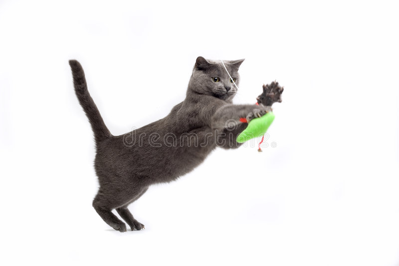 Jugar el gato fotografía de archivo