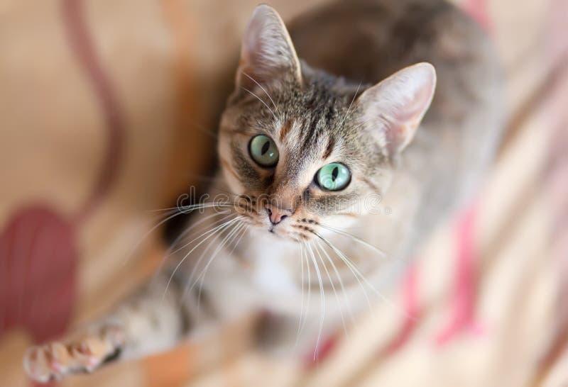 Jugar el gato imagenes de archivo