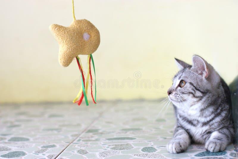 Jugar el gato imagen de archivo