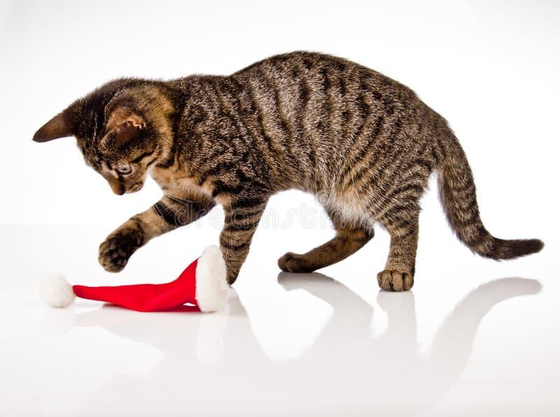 Jugar el gato, la Navidad imagen de archivo libre de regalías
