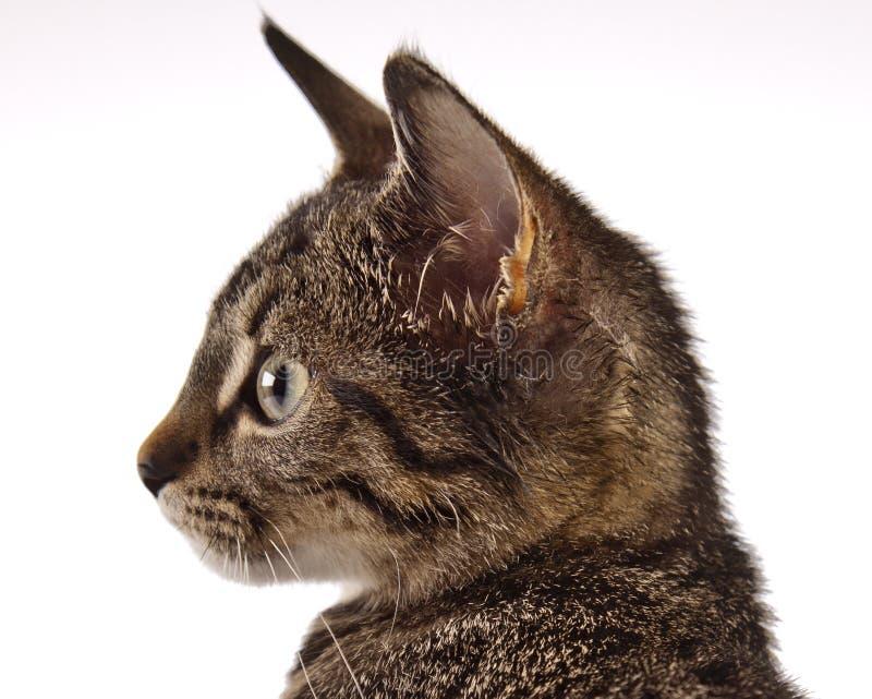 Jugar el gato, la Navidad imagen de archivo