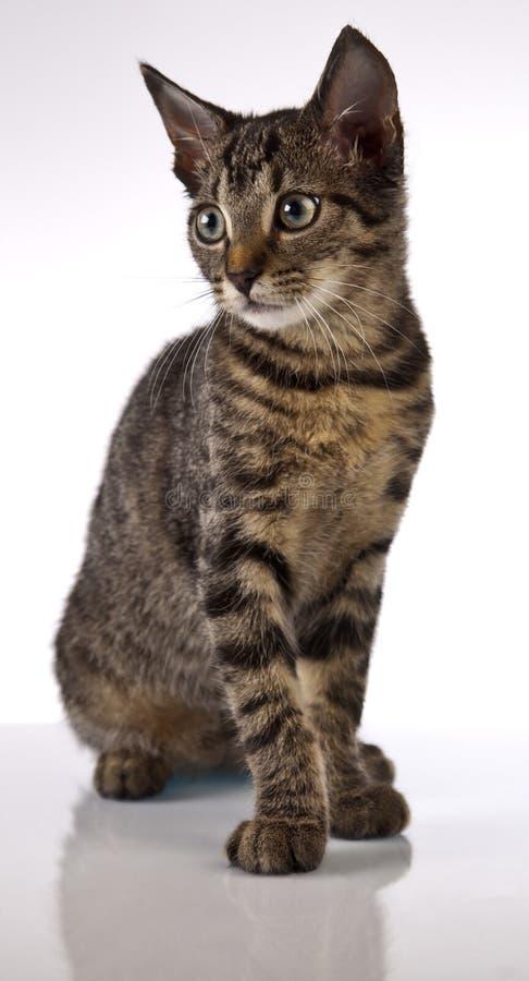 Jugar el gato, la Navidad fotografía de archivo