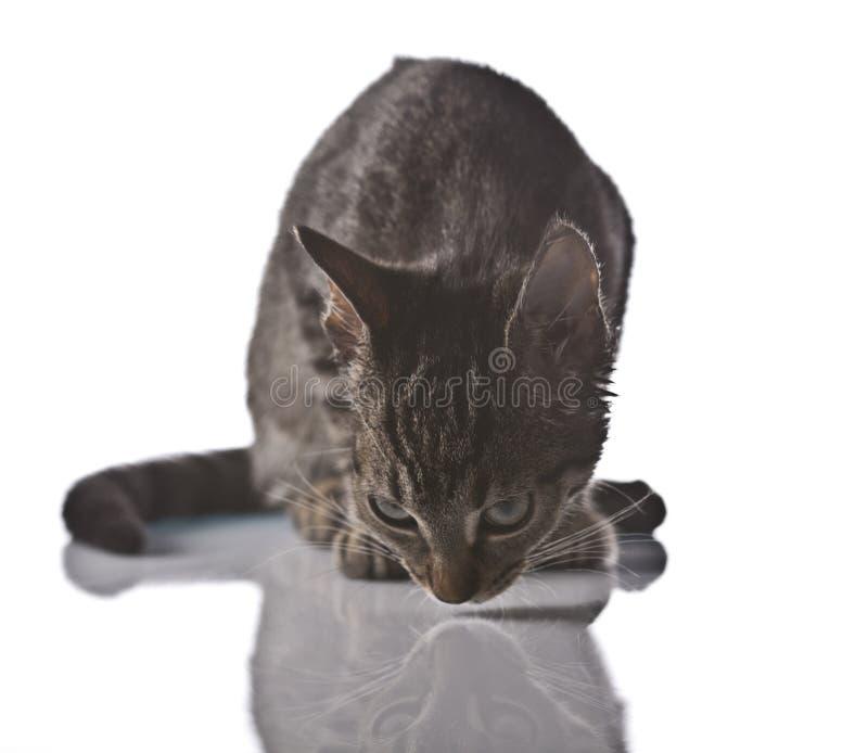 Jugar el gato, la Navidad imágenes de archivo libres de regalías