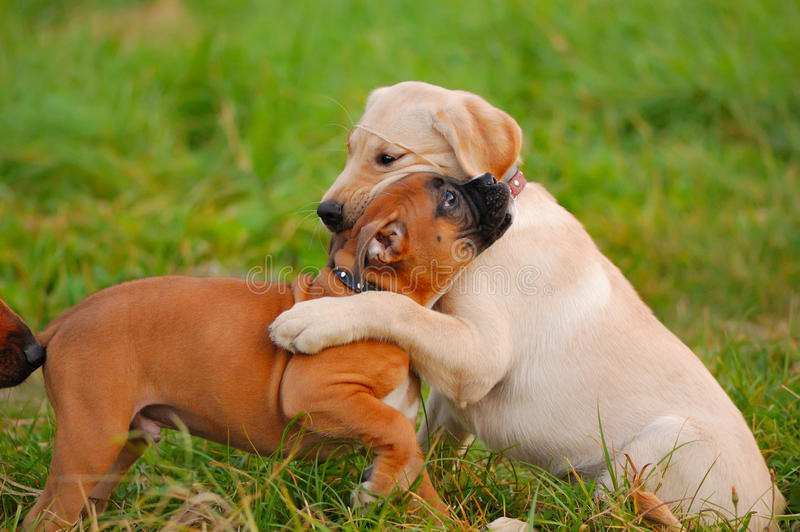 Jugar el perrito foto de archivo libre de regalías