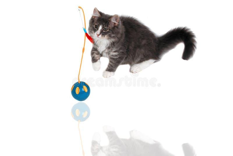 Jugar la hora para el gatito lindo 10 fotos de archivo