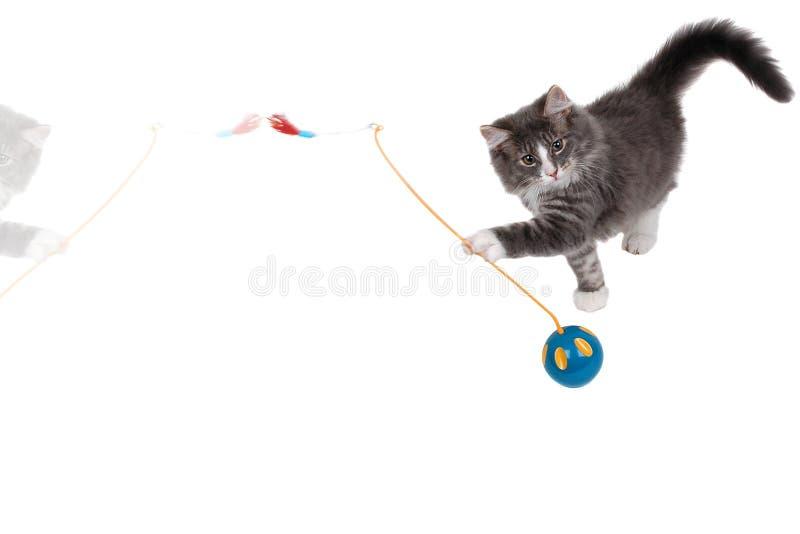 Jugar la hora para el gatito lindo 2 imagen de archivo libre de regalías