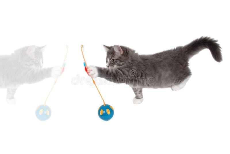 Jugar la hora para el gatito lindo 5 fotos de archivo libres de regalías