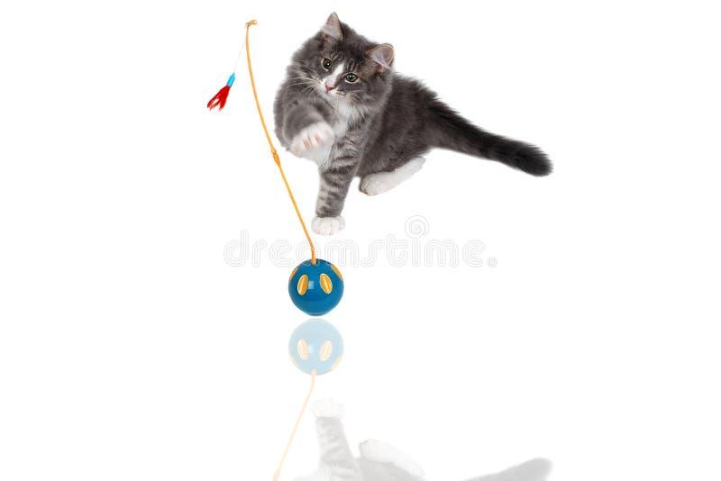 Jugar la hora para el gatito lindo 7 fotografía de archivo