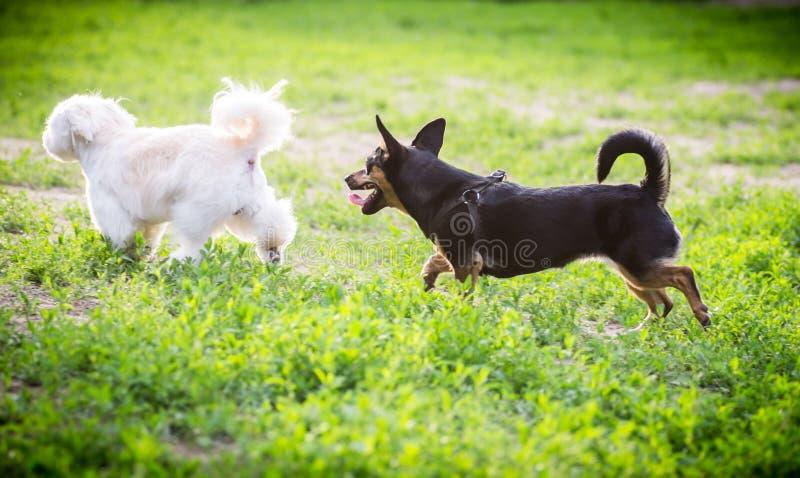 Jugar perros imagen de archivo libre de regalías