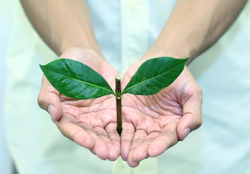 Download Jugeant La Plante Verte Disponible Photo stock - Image du prise, début: 45356548
