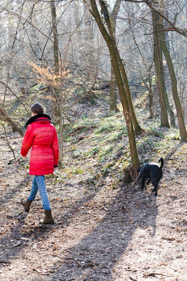 Jugendlich Mädchen in der roten Jacke mit Hunde im Wald gehend - kalte Morgenzeit stockfotos