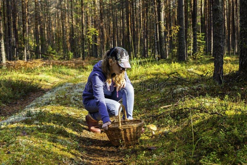 Jugendlich Mädchen erfasst Pilze für einen Weg im Sommer- oder Herbstwald lizenzfreies stockbild