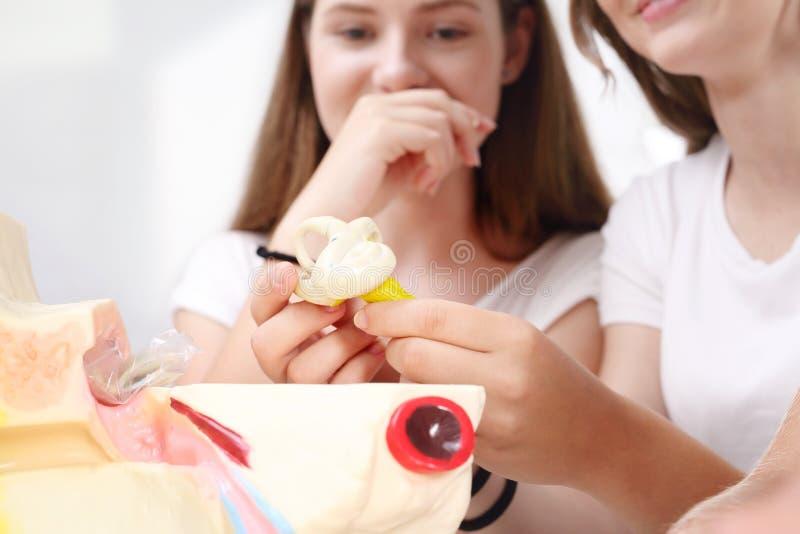 Jugendliche auf der Biologielektion lizenzfreie stockbilder