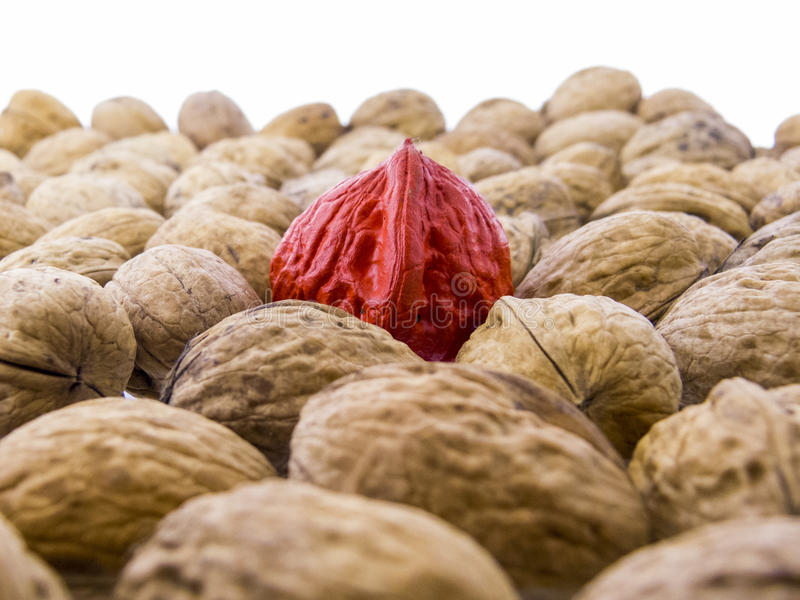 Juglans regia - tasty walnuts stock photos