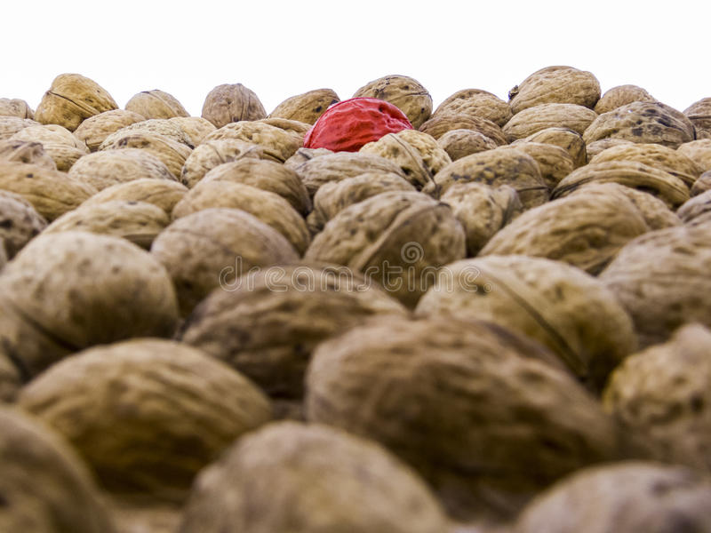 Juglans regia - tasty walnuts royalty free stock photography