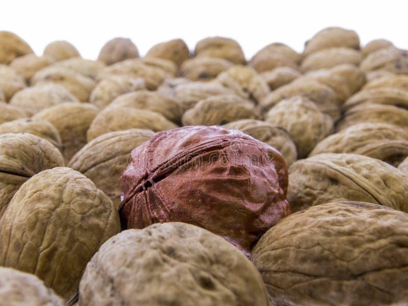 Juglans regia - tasty walnuts royalty free stock photo