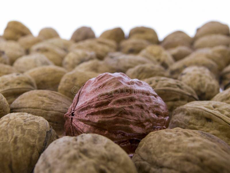 Juglans regia - tasty walnuts stock image