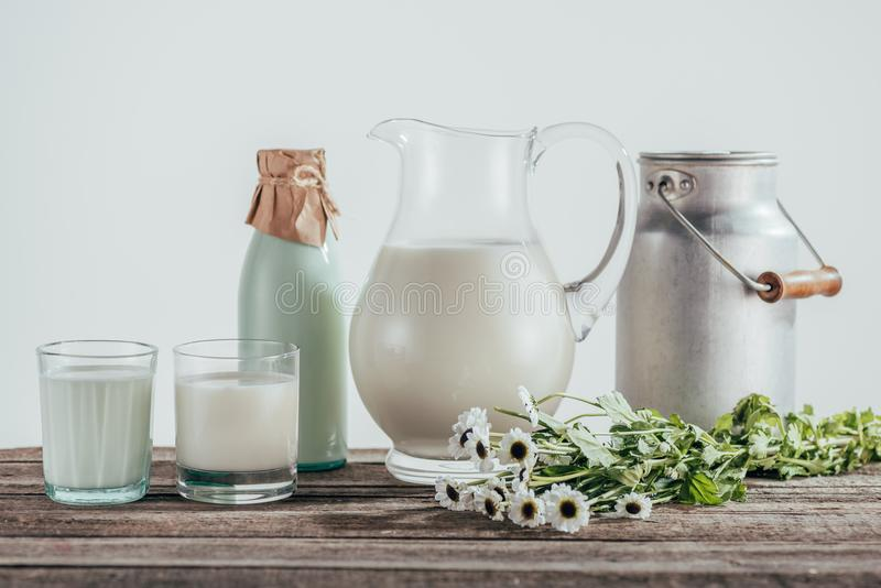 jugs, bottle and two glasses of fresh milk with chamomile flowers on shabby royalty free stock photo