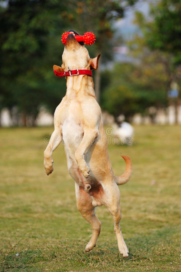 Juguete de la explotación agrícola del perro imágenes de archivo libres de regalías