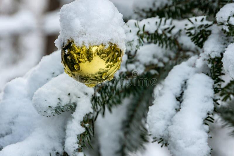 Juguete de la Navidad, bola del oro de la Navidad debajo de la nieve en una rama del abeto Invierno real en el jardín imagenes de archivo