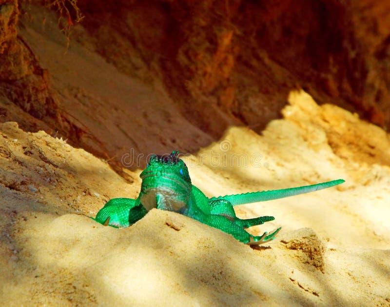 Juguete hermoso del lagarto foto de archivo