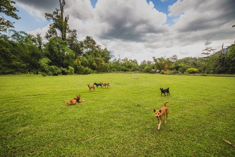 Jugueteo de los perros en la yarda imagen de archivo libre de regalías