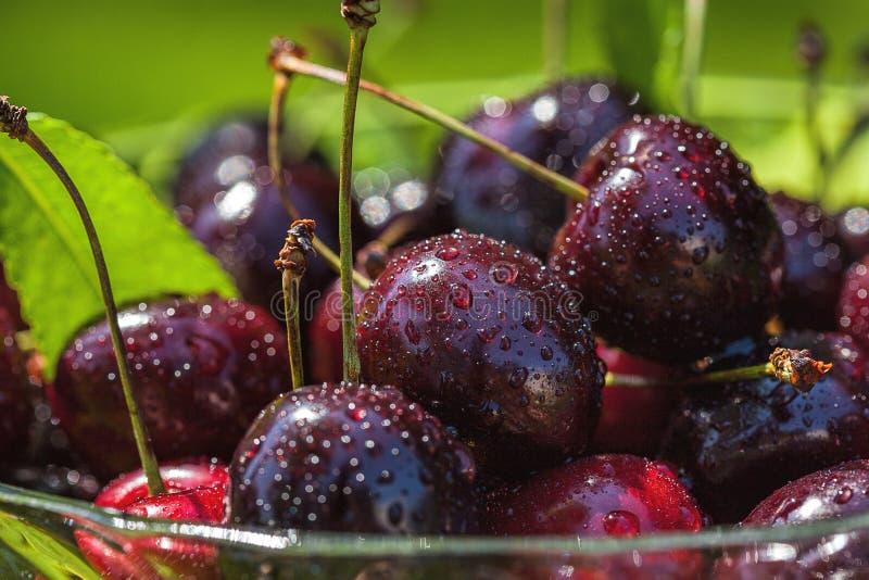 Juice red cherries royalty free stock photo