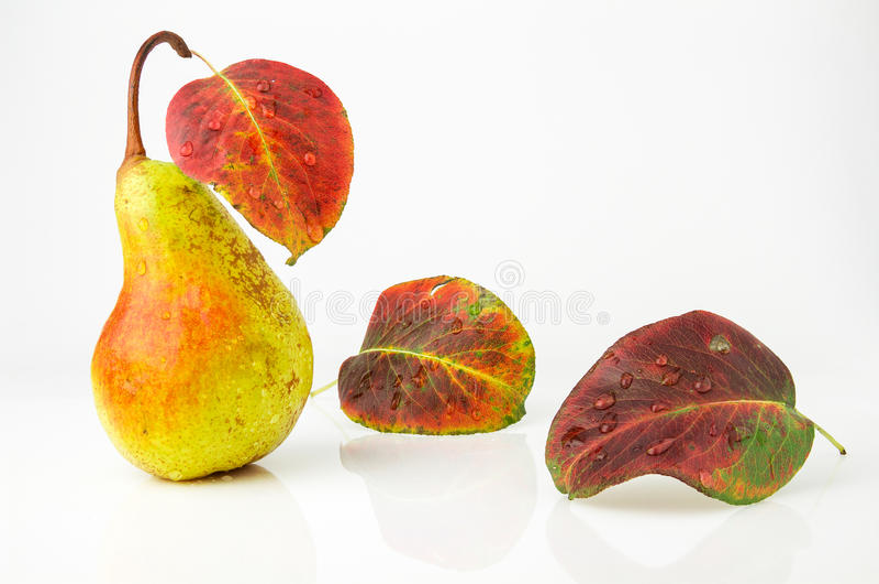 Juicy και ώριμο αχλάδι με τα φωτεινά φύλλα φθινοπώρου στοκ εικόνες με δικαίωμα ελεύθερης χρήσης