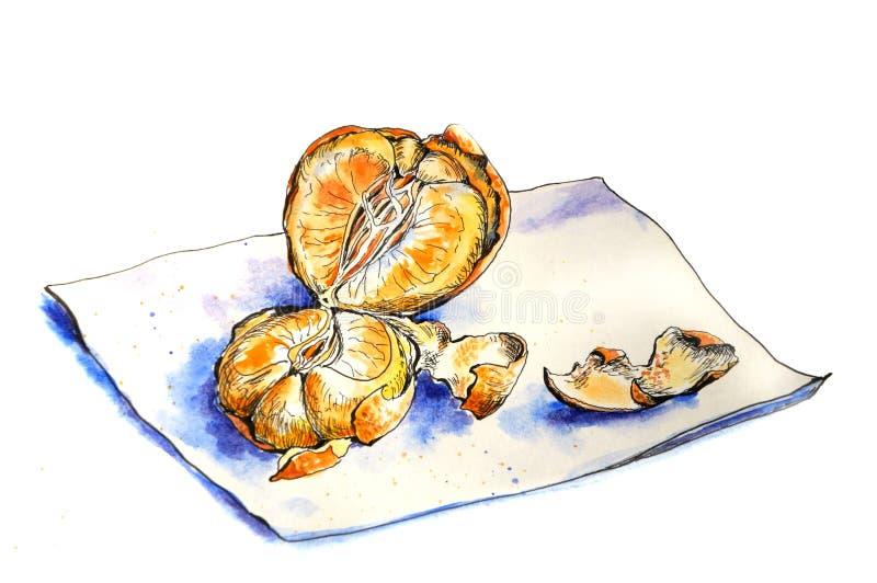Juicy πορτοκαλί tangerine διανυσματική απεικόνιση