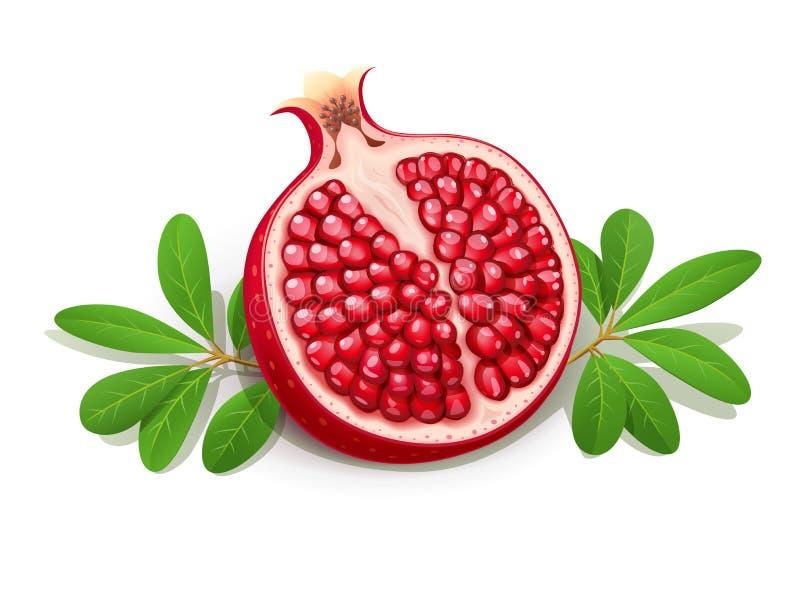 juicy ρόδι ώριμο Φρούτα με τα πράσινα φύλλα διανυσματική απεικόνιση