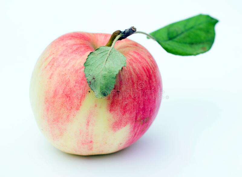 Juicy apples  on white background royalty free stock photography