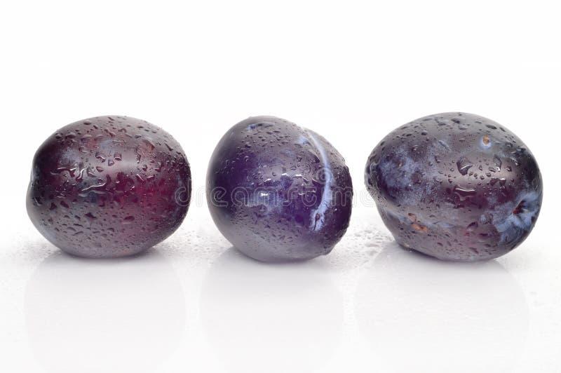 Juicy black plum stock photos