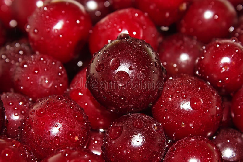 Download Juicy cherry in water stock image. Image of berry, healthy - 25449077
