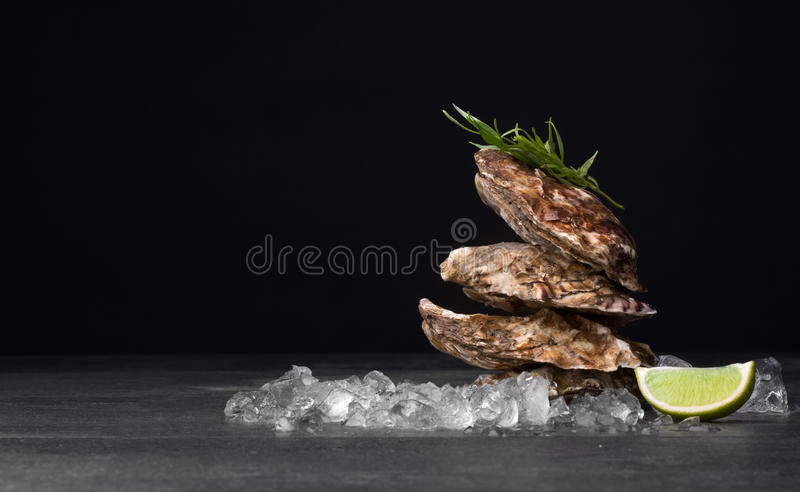 Juicy close oysters on a black background. Delicious tropical sea mollusk with crystal cool ice and decorative herbs. Copy space. Close-up of three big stock images