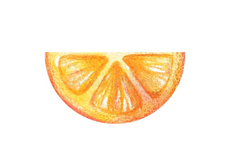 Juicy colorful watercolor citrus for menu, lemonade, summer cocktails.Half circle thin slices of orange or grapefruit in. A watercolor style isolated on a white vector illustration
