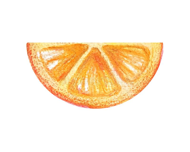 Juicy colorful watercolor juicy orange for menu, lemonade, summer cocktails.Half circle thin slices of citrus grapefruit in a. Watercolor style isolated on a vector illustration