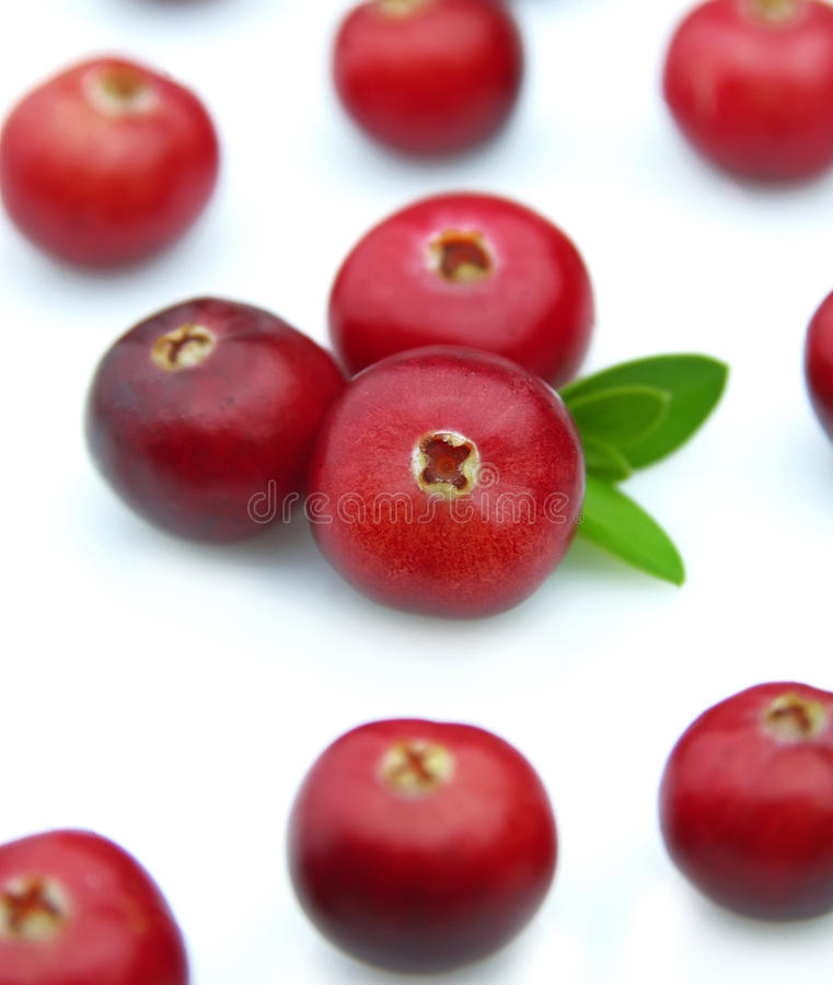 Juicy cranberry stock images
