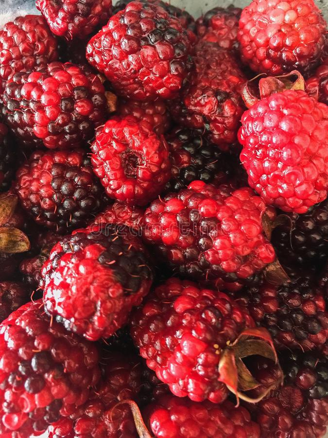 Juicy Fresh Mora Berries stock images