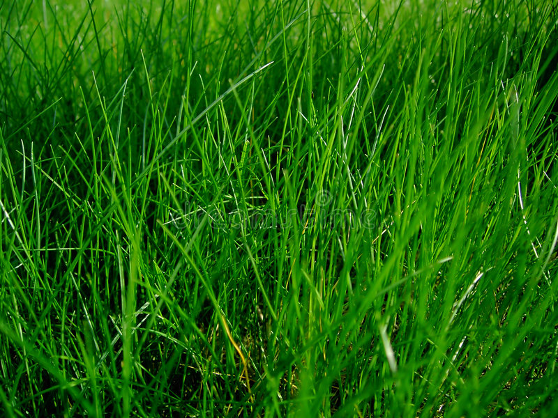 Juicy grass. Just simple juicy grass - can be used for nature or environment protection related projects (just like I've done stock photography