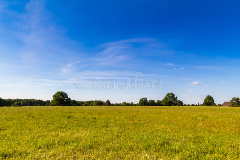 Juicy green meadow surrounded by forrest in the natural reserve royalty free stock photos