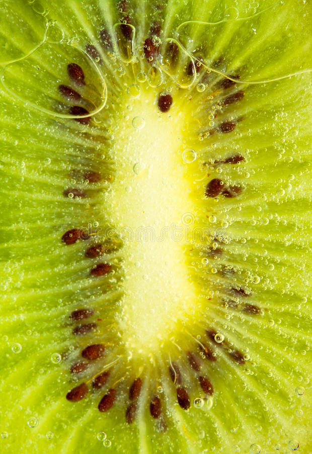 Download Juicy kiwi slice stock photo. Image of juicy, fresh, section - 18451516