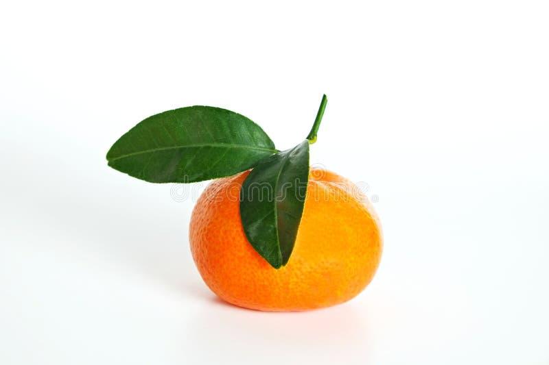 Juicy orange citrus fruit on bright contrast background stock photography