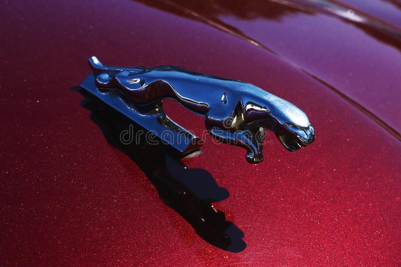 An amazing metal jumping jaguar on the burgundy background stock photo
