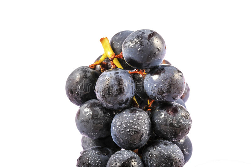 Juicy Purple Grapes. With water droplets on a white background royalty free stock image