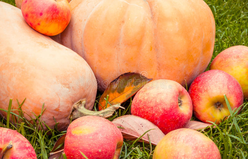 Juicy red apples and ripe orange pumpkin for Halloween stock photos