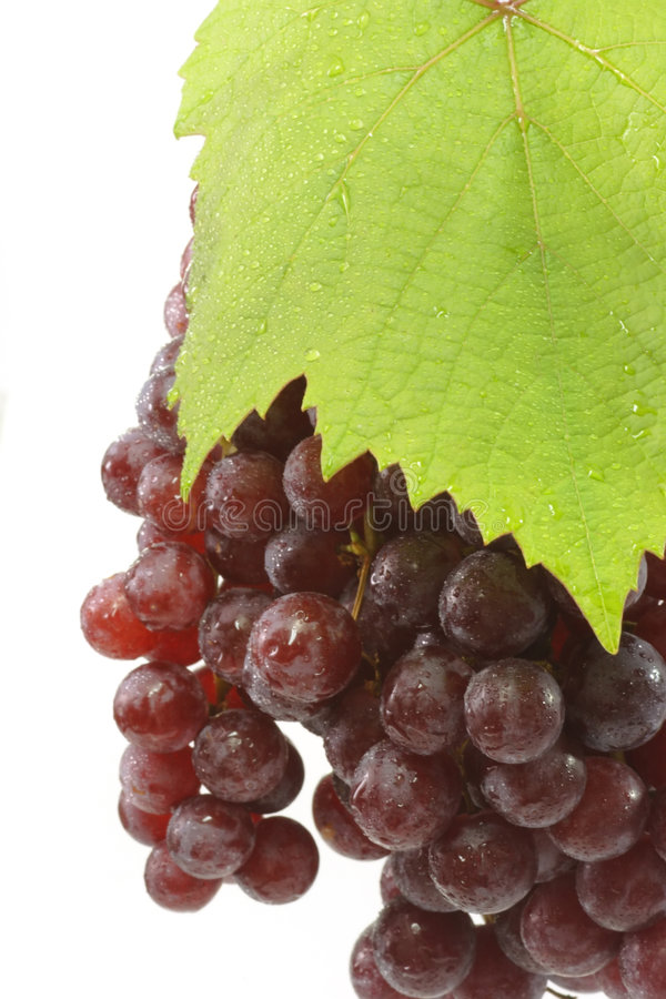 Download Juicy Red Grapes Stock Photo - Image: 4187200