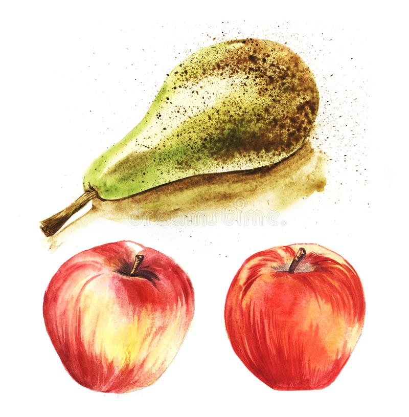 Juicy ripe green pear conference and bright red bulk apples on a white background. Set of three hand-drawn colorfull watercolor vector illustration