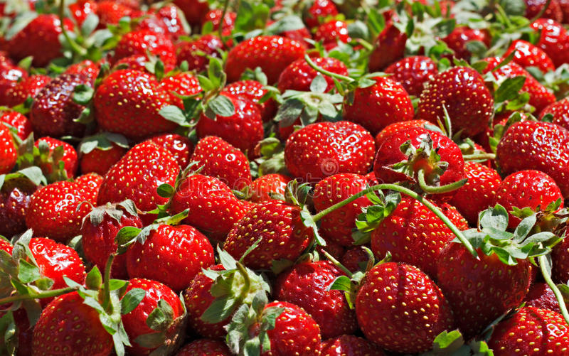 Juicy Ripe Strawberrys Royalty Free Stock Images
