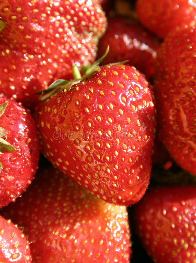 Download Juicy strawberries stock photo. Image of fruits, summer - 191090