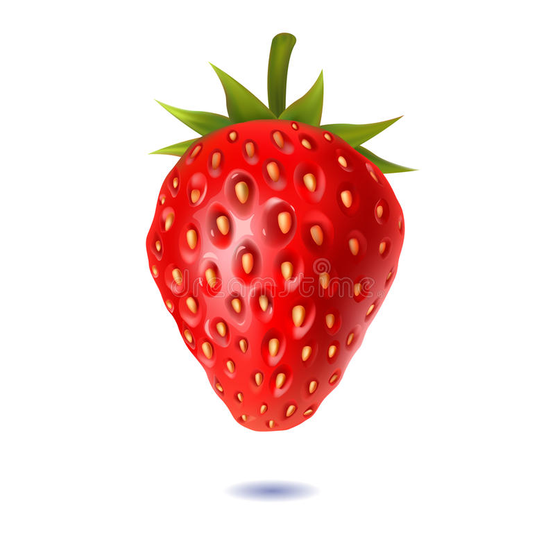 Juicy strawberries on a white background vector illustration